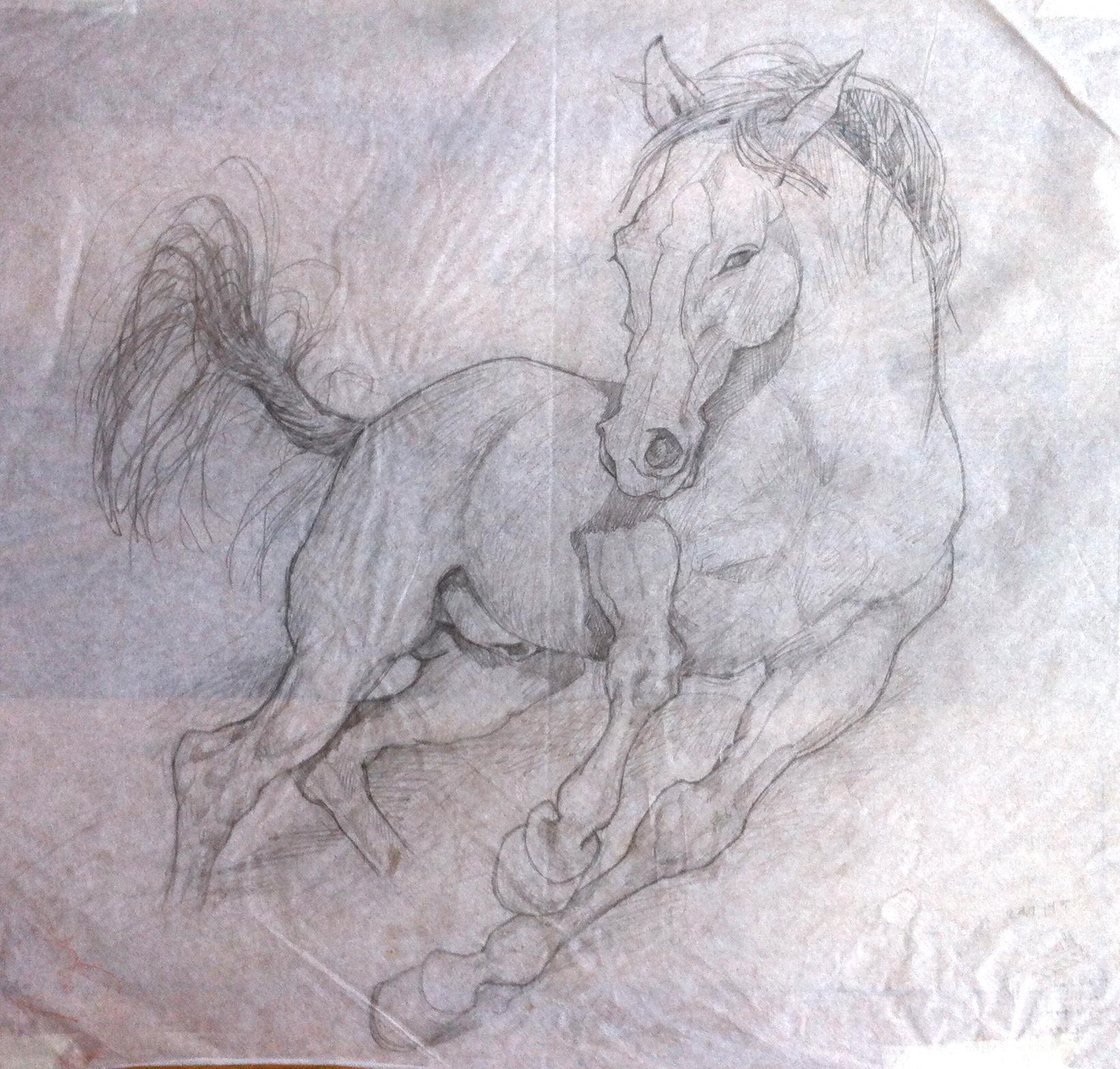 Esquisses cheval